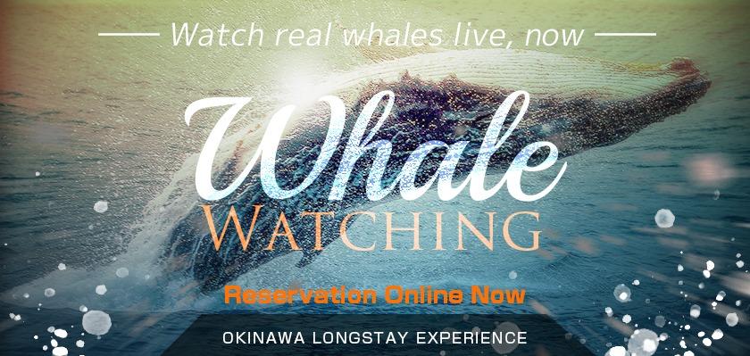 whaleWatching_en